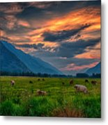 Sunset Over The Pasture Metal Print