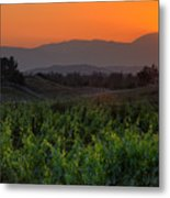 Sunset Over The Vineyard Metal Print by Peter Tellone