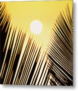 Sunset Palm Fronds Metal Print