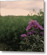 Sunset Purple  Metal Print