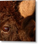 Sunset Reflections In The Eye Of A Buffalo Metal Print