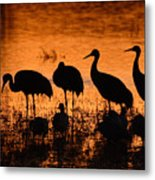 Sunset Reflections Of Cranes And Geese Metal Print