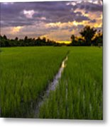 Sunset Rice Fields In Cambodia Metal Print