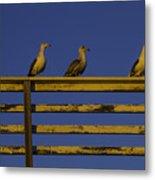 Sunset Seagulls Metal Print