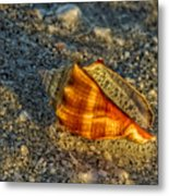 Sunset Seashell Metal Print