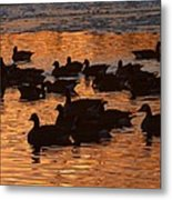 Sunset Silhouettes Metal Print