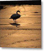 Sunset Swan Metal Print