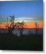 Sunset Through The Branches Metal Print