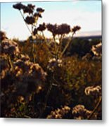 Sunset Through The Flowers Metal Print