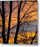 Sunset Through The Tree Silhouette Metal Print