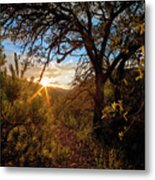 Sunset Through The Trees Metal Print