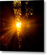 Sun Bursting Through The Trees, Chiloquin Oregon Metal Print