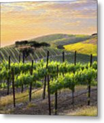 Sunset Vineyard Metal Print by Sharon Foster