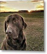 Sunset With My Good Boy Brownie  Metal Print
