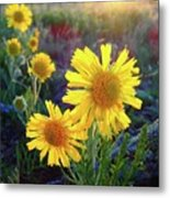 Sunsets And Sunflowers Of Buena Vista 2 Metal Print