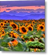 Sunsets And Sunflowers Metal Print