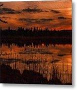 Sunsettia Gloria Catus 1 No. 1 L B. Metal Print