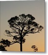 Sunsetting Trees Metal Print