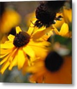 Sunshine And Daisies Metal Print