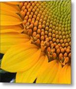 Sunshine In A Flower Metal Print