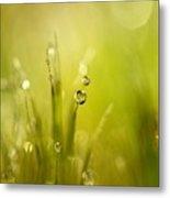 Sunshine Moss Metal Print
