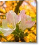 Sunshine On Apple Blossoms Metal Print