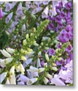 Sunshine On Foxgloves Metal Print