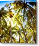 Sunshine Palms Metal Print