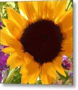Sunshine Sunflower In The Garden Metal Print
