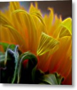 Sunshine Sunflower Petals Two Metal Print