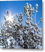 Sunshine Through Snow Covered Tree Metal Print