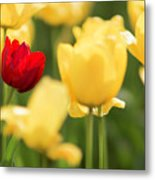 Sunsoaked Tulips #5 Metal Print