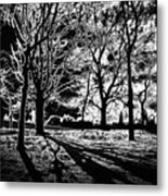 Super Contrasted Trees Metal Print