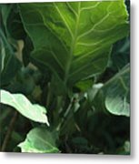 Super-fly Cabbage Metal Print