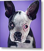 Super Pets Series 1 - Bugsy Close Up Metal Print