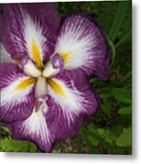 Super-sized Iris Metal Print