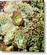 Super Succulents Metal Print