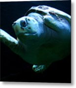 Super Turtle Metal Print