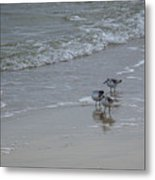 Surf And Birds Metal Print