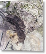 Surface Coal Mining In Poland. Destroyed Land. View From Above.  Metal Print