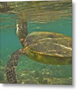 Surfacing Seaturtle Metal Print