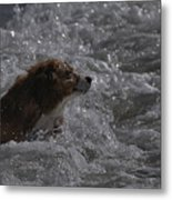 Surfer Dog 1 Metal Print