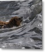 Surfer Dog 2 Metal Print