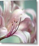 Surprise Lily Pink Metal Print
