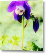 Surreal Columbine Metal Print