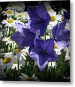 Surrounded By Daisies Metal Print by Trina Prenzi