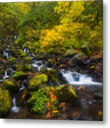 Surrounded By Fall Color Metal Print