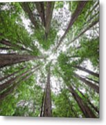 Surrounded By Giants Metal Print