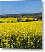 Surrounded By Rapeseed Flowers Metal Print