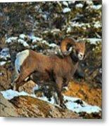 Surverying The Jasper Landscape Metal Print